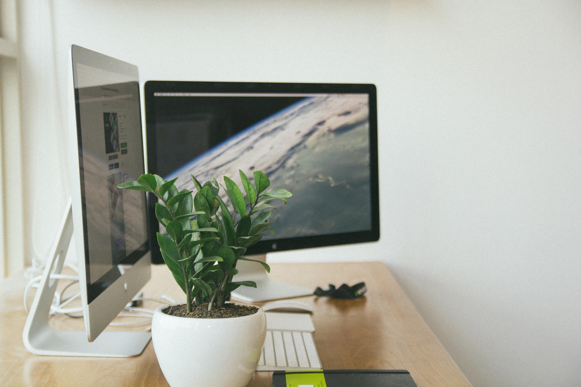 schreibtisch-bildschirm-tastatur-pflanze