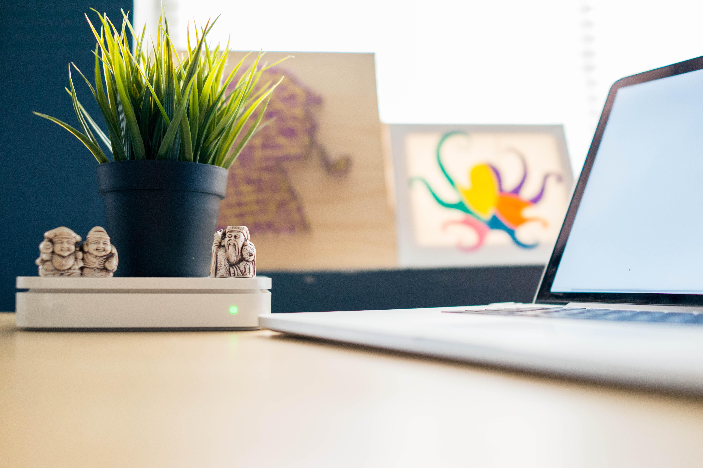 Pflanze am Arbeitsplatz
